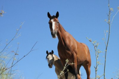 Next door's horses