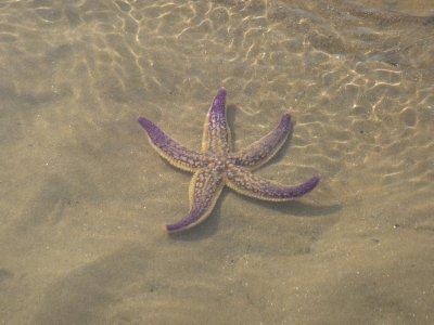 Star fish (it was dead, but still looked pretty!)