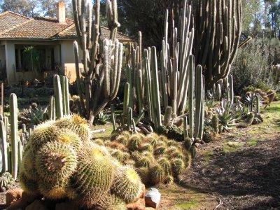 108_Cactus_Farm.jpg