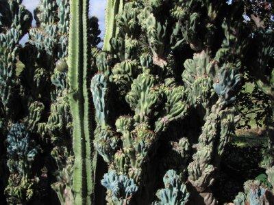 110_Weird_cactus.jpg