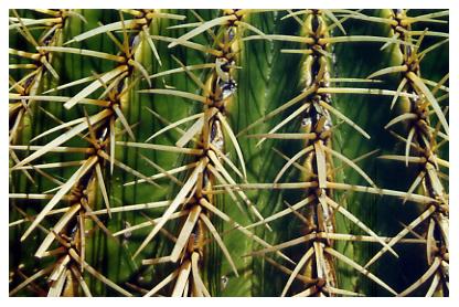 Cactus, San Diego