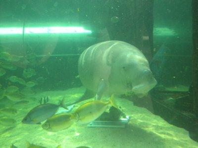 smiling_dugong.jpg