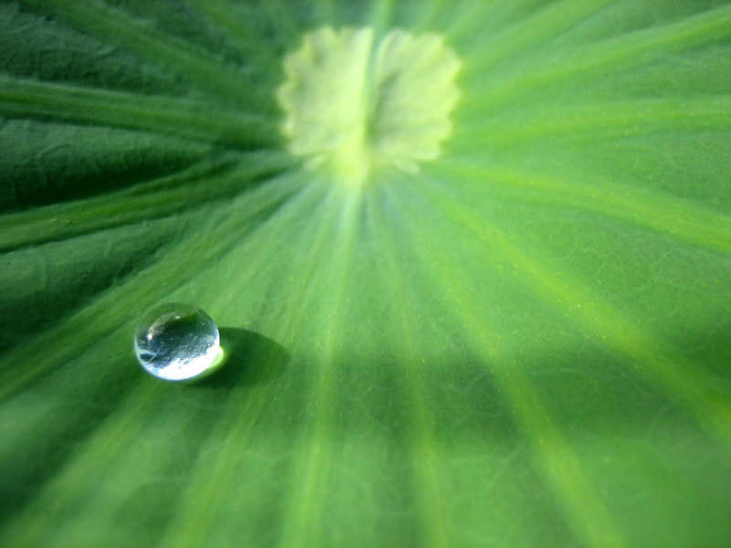 A drop on a leaf