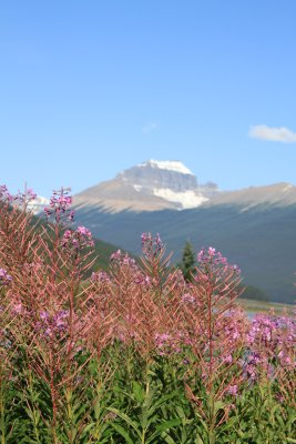 flowers and mtns