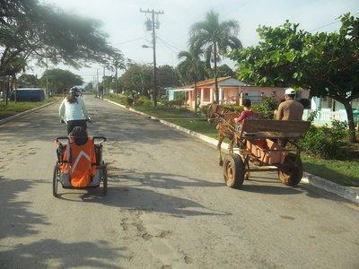 bike near horses