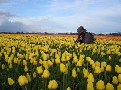Robert crouching in a yellow stripe of tulips near Keukenhof, Holland