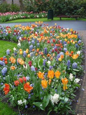 The many colors of flower at Keukenhof