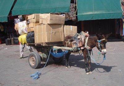 Donkey preparing to haul a lot of stuff