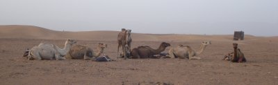 Our camels resting after our 2-hour trek to the desert