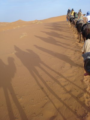 Silhouette of our camel train