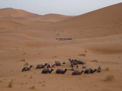 Our camels resting after the trek to the desert