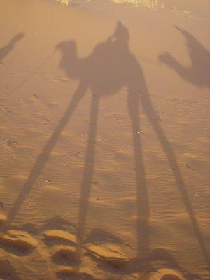 Camel silhouette, Merzouga, Morocco