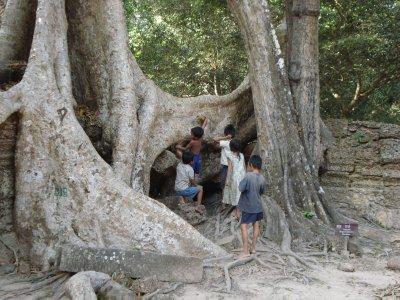 Tree at Ta Phrom
