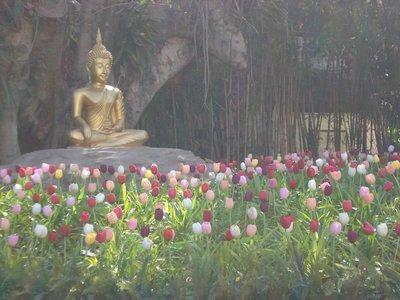Buddha with tulips at Wat Phan Tao in Chiang Mai