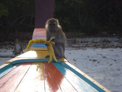 Monkey sitting on our boat