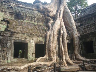 Ta Prohm Temple--Angkor Wat