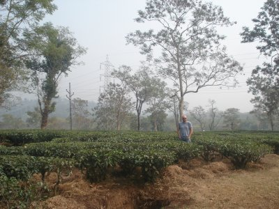 Robert standing in a field of Darjeeling Tea.
