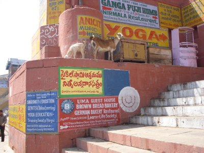 Goats and street signs on a ghat