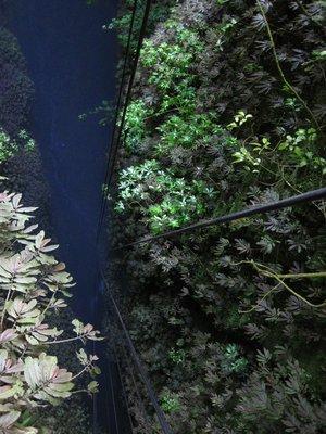 Waitomo_Caves_032.jpg