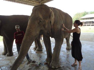chiang mai elephant 077