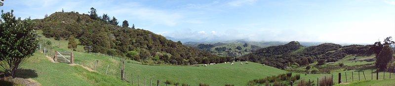 large_NZ_Pahia_004.jpg