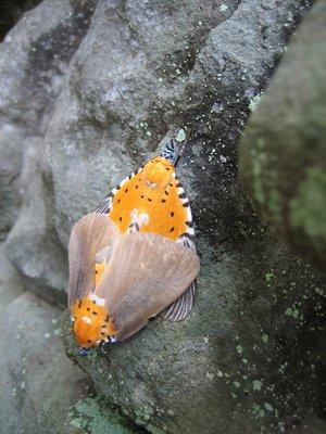 Moths   Angkor Wat