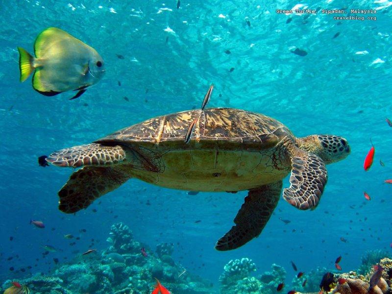large_turtle-wal..152x864.jpg