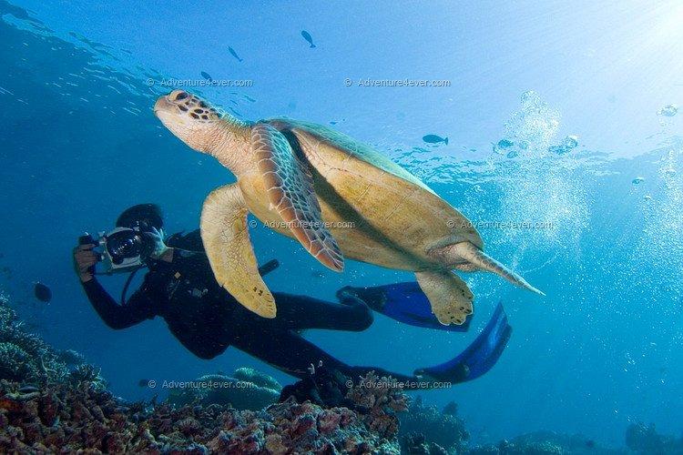 large_turtle.jpg