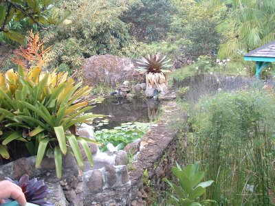Botanical Gardens, Nevis, West Indies, May 2011 (15)