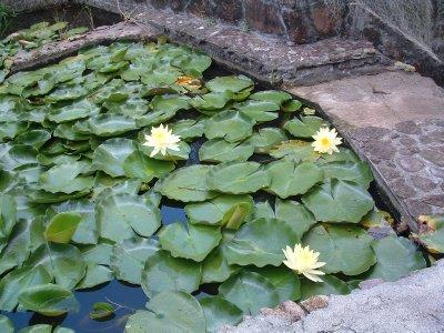 Botanical Gardens, Nevis, West Indies, May 2011 (17)