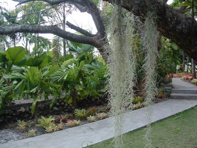 Botanical Gardens, Nevis, West Indies, May 2011 (18)