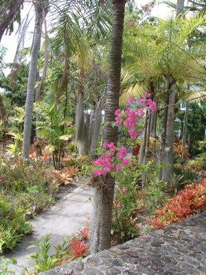 Botanical Gardens, Nevis, West Indies, May 2011 (26)