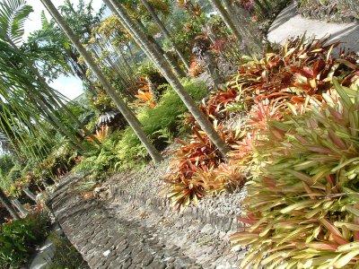 Botanical Gardens, Nevis, West Indies, May 2011 (28)