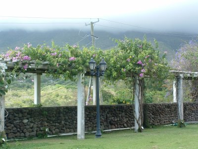 Botanical Gardens, Nevis, West Indies, May 2011 (45)