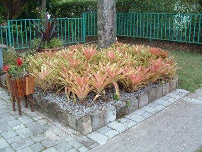 Nevis Botanical Gardens, Nevis, West Indies