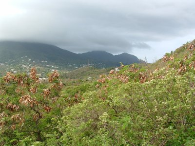 Saddle Hill Hike, Nevis, West Indies May 2011 (2)