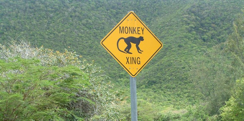 Nevis, West Indies, Monkey Xing!