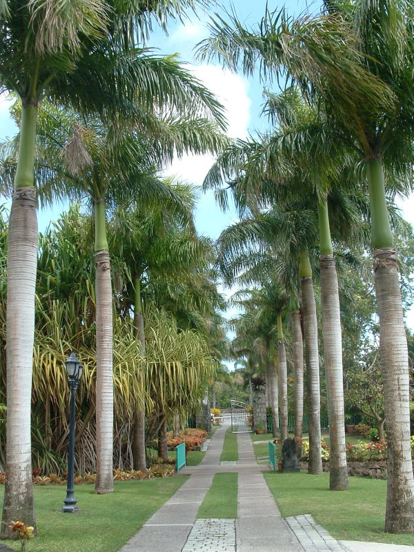 Botanical Gardens, Nevis, West Indies, May 2011 (7)