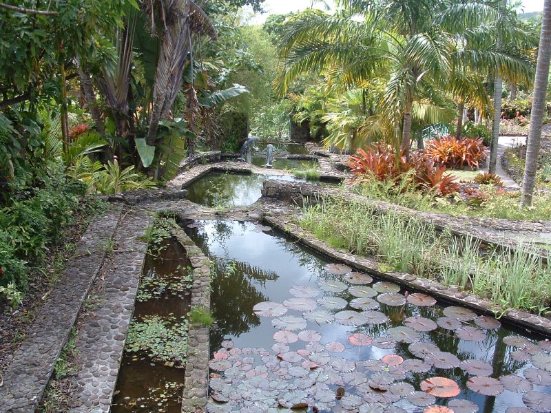 Botanical Gardens, Nevis, West Indies, May 2011 (24)