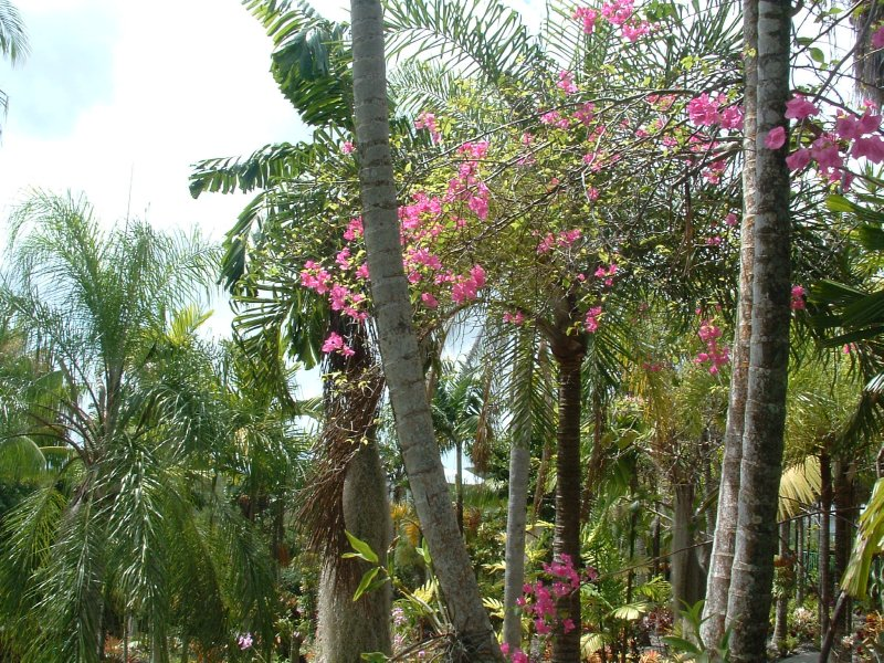 Botanical Gardens, Nevis, West Indies, May 2011 (25)