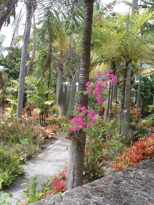 Botanical Gardens, Nevis, West Indies, May 2011 (26)