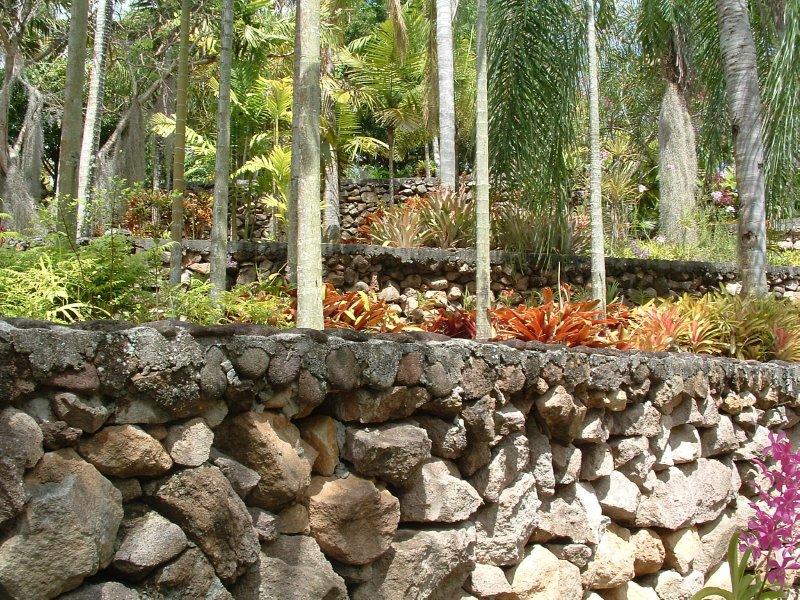 Botanical Gardens, Nevis, West Indies, May 2011 (29)