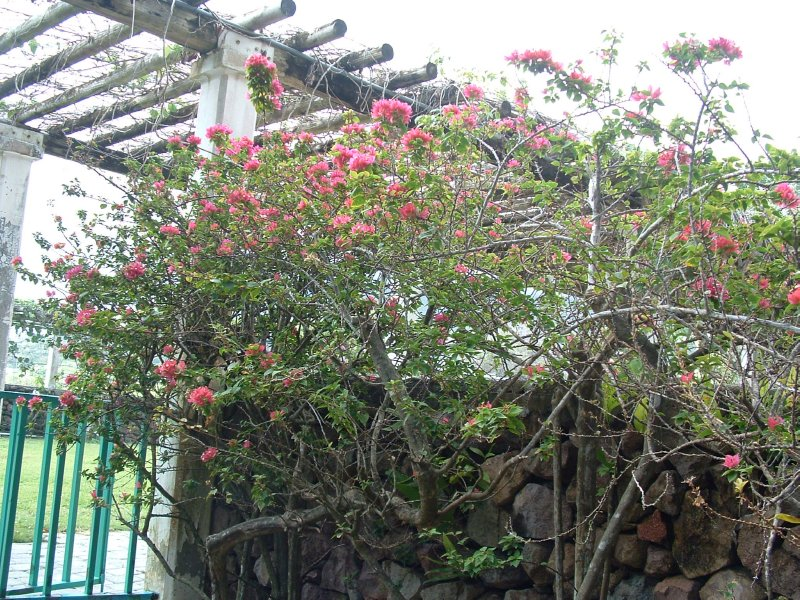 Botanical Gardens, Nevis, West Indies, May 2011 (42)