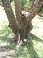 Botanical Gardens, Nevis, West Indies, May 2011 (8)