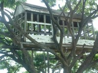 Nevis, West Indies, May 20, 2011 Tree House at Cades Bay