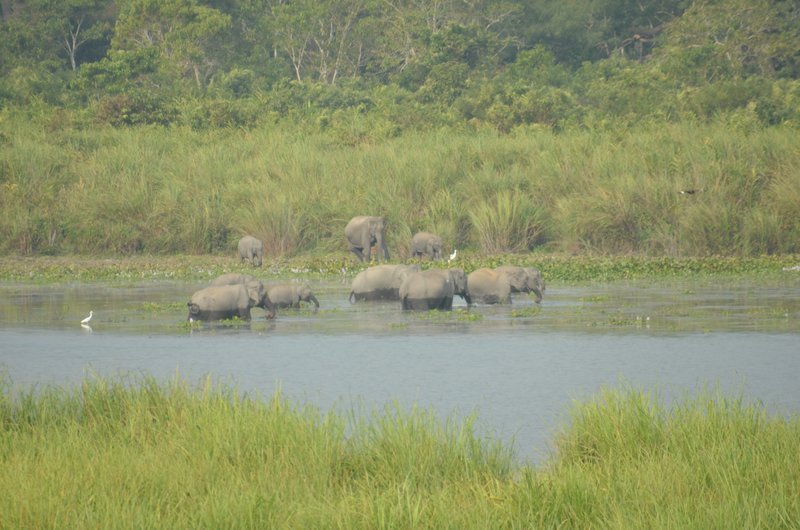 Elephant Herd at the Lakeside