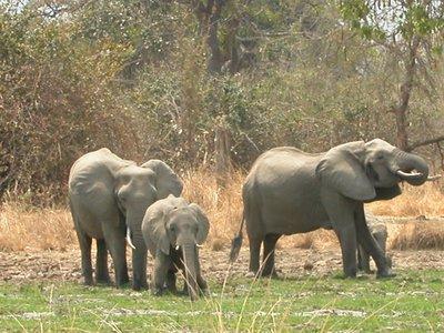 Three Elepants