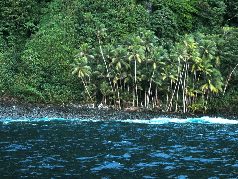 Cocos Island Palms