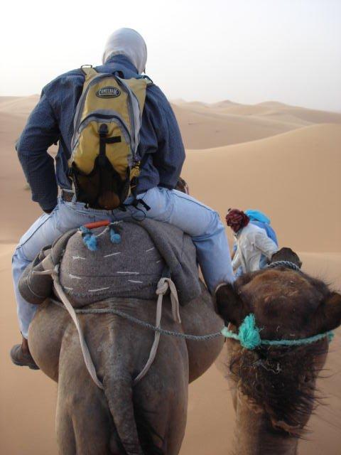 camel on camel