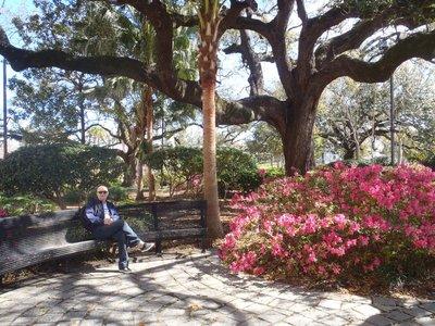 Great trees and very healthy azaleas